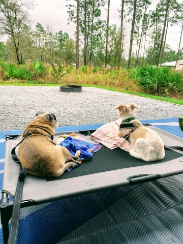 Dogs watching birds